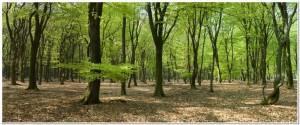 panorama woods
