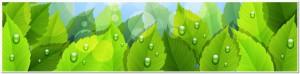 eco green life 4